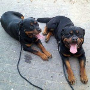 trygghet-vakthund-sakerhet-alarm-eks-vakthundar